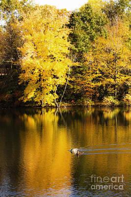 Autumn Pond Poster by Leslie Leda