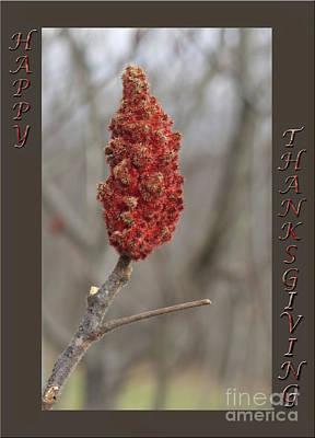 Autumn Sumac  Thanksgiving Greeting Card #2 Poster by Andrew Govan Dantzler