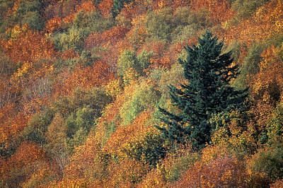 Autumnal Colours Poster by Kaj R. Svensson