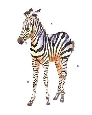 Baby Zebra Nursery Animal Art Poster by Alison Fennell