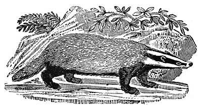 Badger Poster by Granger