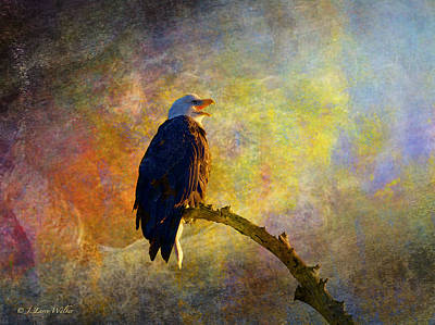 Bald Eagle Awaiting Sunrise Poster by J Larry Walker