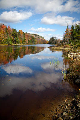 Bald Mountain Pond In The Adirondacks Poster by David Patterson