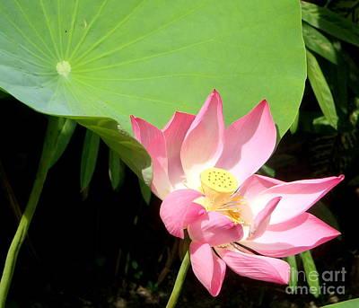 Balinese Flower Poster by Samantha Mills