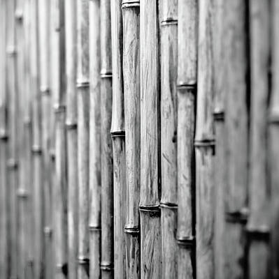 Bamboo Fence Poster by George Imrie Photography
