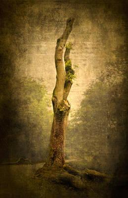 Bare Tree Poster by Svetlana Sewell