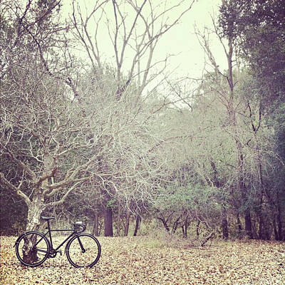 Bicycle Awaits At Entrance To Forest Poster by Joey Celis