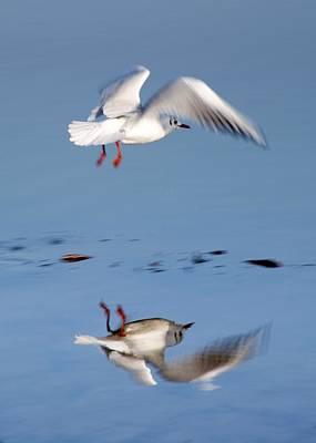 Bird Landing Poster by John Short