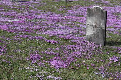 Blank Colonial Tombstone Amidst Graveyard Phlox Poster by John Stephens
