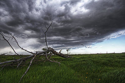 Blowing Grass And Deadwood Poster by Dan Jurak