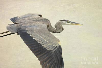 Blue Heron On Canvas Poster by Deborah Benoit