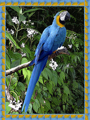 Blue Macaw Poster by Kurt Van Wagner