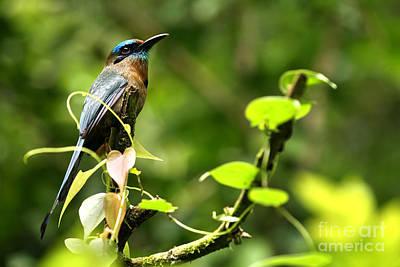 Blue Tropical Bird Poster by Matt Tilghman