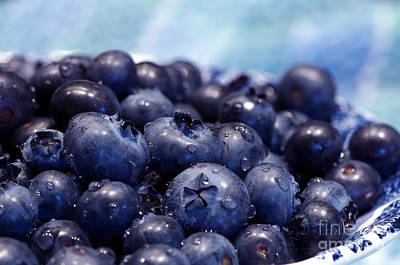 Blueberries Freshly Picked Poster by Sharon Talson