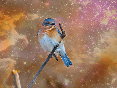 Bluebird Perched In Space Poster by J Larry Walker