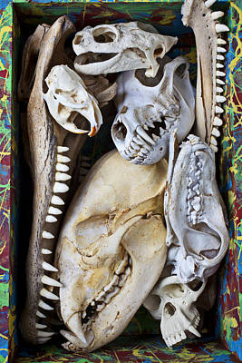Fangs Poster featuring the photograph Bone Box by Garry Gay