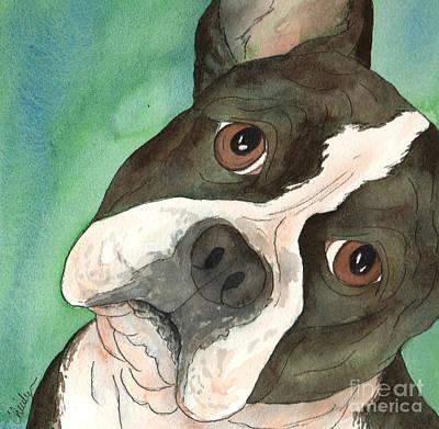Boston Terrier Tilted Head Poster by Cherilynn Wood
