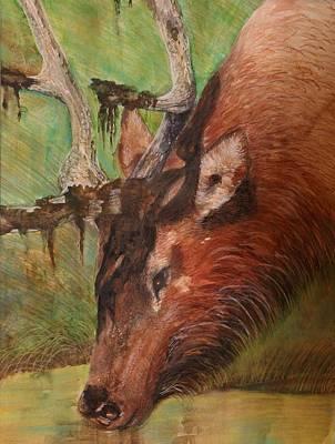 Bull Elk Poster by Angela Mullhatten