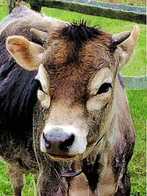 Calf Closeup Poster by Susan Savad