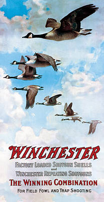 Canada Geese In Flight Poster by C Everitt Johnson