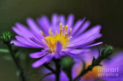 Candles On A Daisy Poster by Kaye Menner