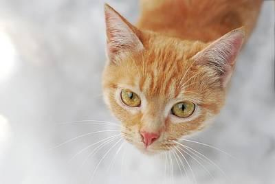 Cat In Orange Color Poster by Lilia Petkova
