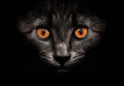 Cat In Shadows. Poster by Ingólfur Bjargmundsson