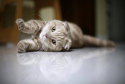 Cat Stretching Poster by LeoCH Studio