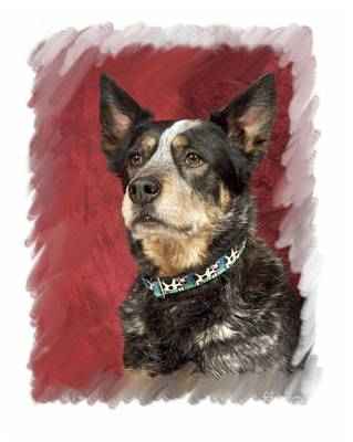 Cattle Dog 699 Poster by Larry Matthews