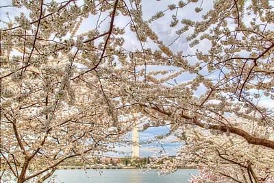 Cherry Blossoms Washington Dc 3 Poster by Metro DC Photography