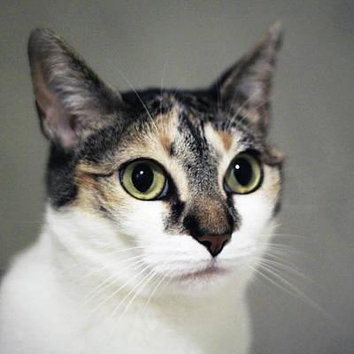 Close Up Of Cat Poster by Saulgranda