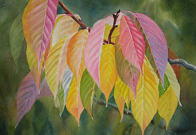 Colorful Fall Leaves Poster by Sharon Freeman