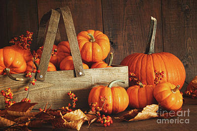 Colorful Pumpkins With Wood Background Poster by Sandra Cunningham