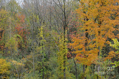 Colors Of Fall Poster by Linda Seacord