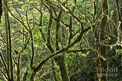 Costa Rican Canopy Poster by Matt Tilghman
