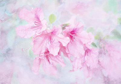 Cotton Candy Poster by Brenda Bryant