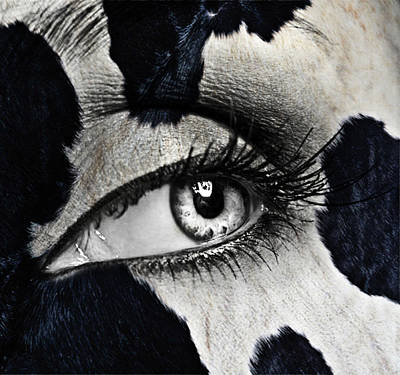 Cow Poster by Yosi Cupano