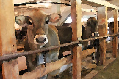 Cows In The Barn Poster by Brooke Ryan