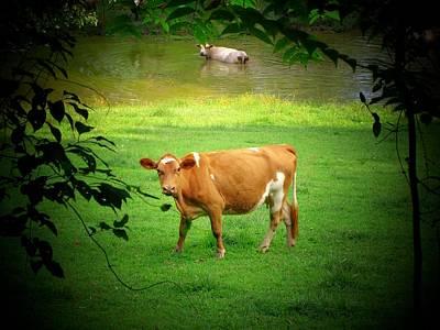 Cows Poster by Michael L Kimble