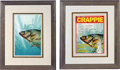 Crappie And Minnows Poster by JQ Licensing