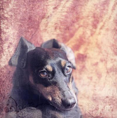 Cute Daschund Poster by Angel  Tarantella