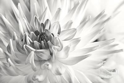 Dahlia Flower 02 Poster by Nailia Schwarz