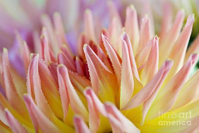 Dahlia Flower 05 Poster by Nailia Schwarz