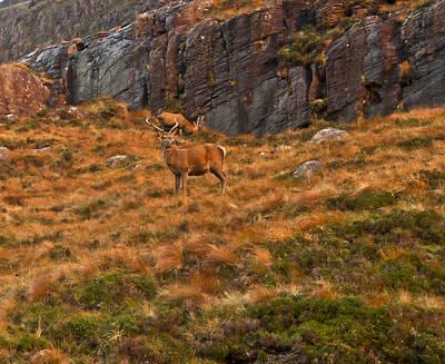Deer On Scottish Hillside Poster by Gary Eason