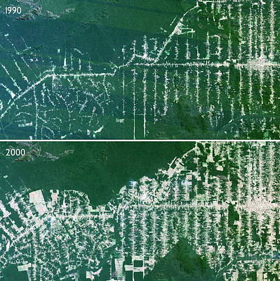 Deforestation In The Amazon Poster by Planetobserver