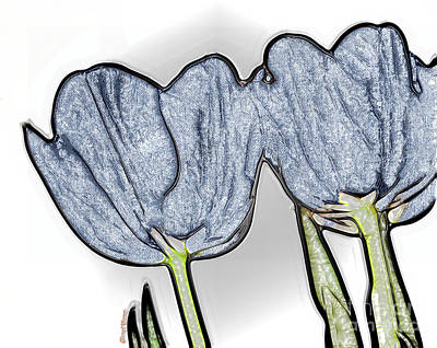 Denim Tulips Poster by Cheryl Young