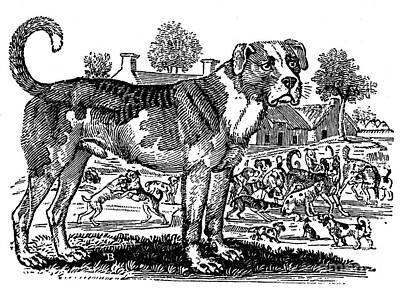 Dog: Mastiff Poster by Granger
