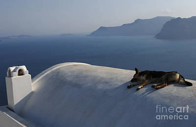 Dog Tired In Santorini Poster by Bob Christopher
