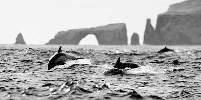 Dolphins At Anacapa Arch Poster by Steve Munch