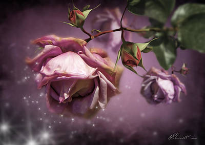 Dusky Pink Roses Poster by Svetlana Sewell